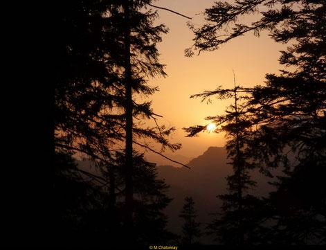 Randonnée brame du cerf dans les Pyrénées