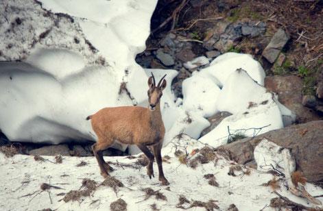 Stage photos faune sauvage dans les Pyrénées