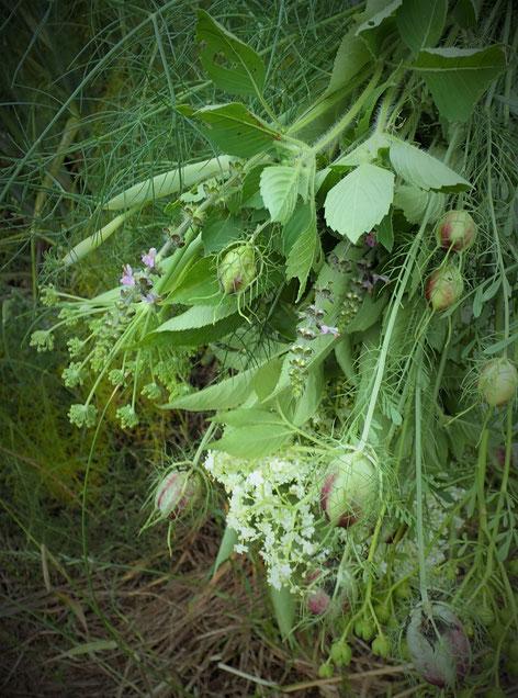 無農薬自然栽培のフレッシュハーブをお届けします。すどう農園
