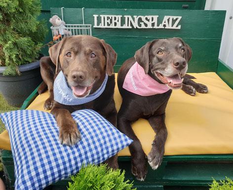 orthopädische visco Hundematratzen