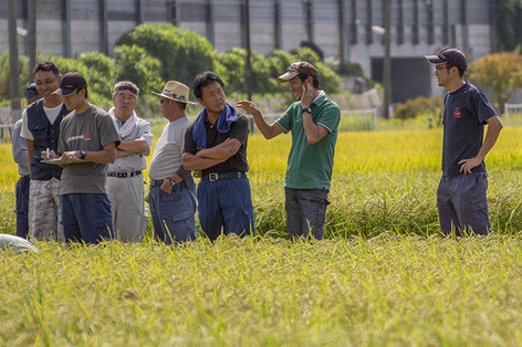 生育は順調! 農家さんたちの雰囲気も和やか。