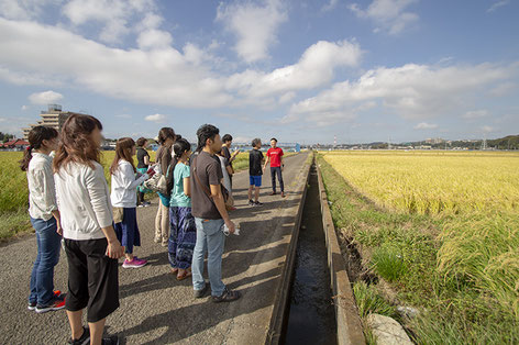 まずは稲刈り目前の田んぼ見学から。「田んぼは今が一番良い時期だから、少し時間を多めに割いて説明させていただきます」と伊藤さん。あるお客様はこの光景を見て「一番良い時に来たね!」とおっしゃっていました。右側に見えているのが山田錦。