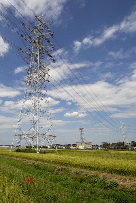 鉄塔の下の山田錦、だいぶ穂が垂れてきた。周囲では彼岸花も咲いている。こうして少しずつ秋の香りが強くなって・・・と思いきや、まだまだ暑い!!