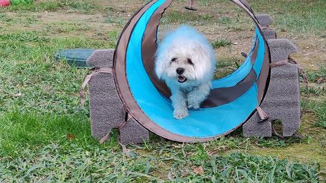 Pension canine Les Pattes Libres