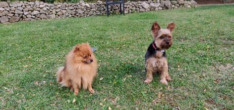 Pension canine familiale Hérault