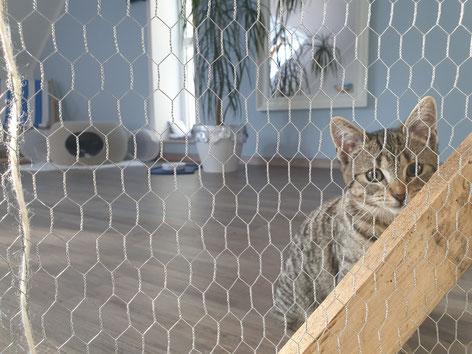 Gefährlicher Minitiger hinter Gittern - kein Wunder, dass Kasi Angst hatte! ;-)