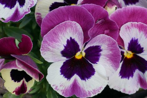 Pflanzen für Beet, Balkon und Friedhof