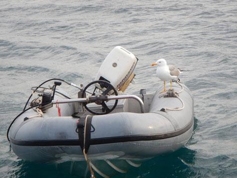 Segeltörn mitmachen von Sardinien, Korsika über Mallorca, Gibraltar bis in die Algave