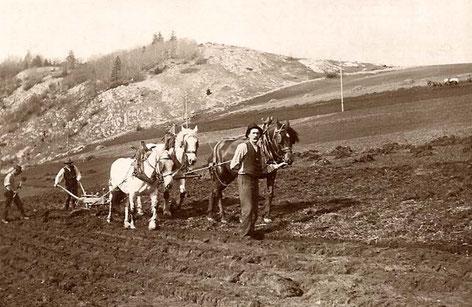 Il lavoro nella campagna del Mont-du-Lac nel 1905 con Alfred-Moise Rochat che tiene le briglie dei cavalli (Collezione Jean-Emmanuel Rochat)