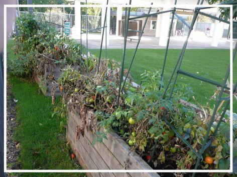 privilegejardin.com  community garden - jardin partagé entreprise - co-construction jardin potrager par les salariés