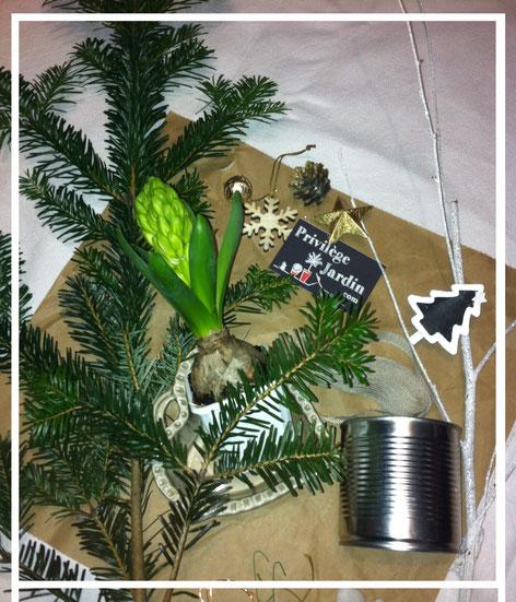 privilegejardin.com  Décoration de table parfumée pour Noël, sapin et jacinthe