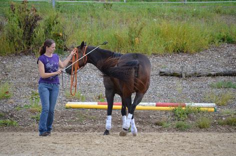 Sabrina mit Peppy in der Hinterhandkontrolle. Die Kontrolle über den Motor des Pferdes.