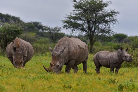 Das Khama Rhino Sanctuary heisst nicht umsonst so