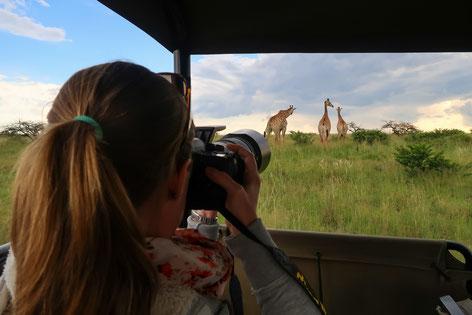 Auf Foto-Safari