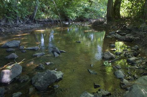 Rivière du Sarthon. Photographie prise le 31 mai 2020. Le niveau très faible du cours d'eau laisse apparaître les racines des arbres. Photo/Nicolas Blanchard