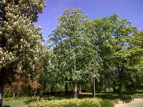 Info Baumpflege Baumspezialist Baden Baden