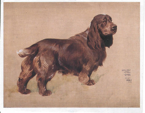 "Gemälde von Arthur Wardle des Field Spaniels ""Schillingford Rona"" aus dem Jahre 1906, Foto: David Hancock"