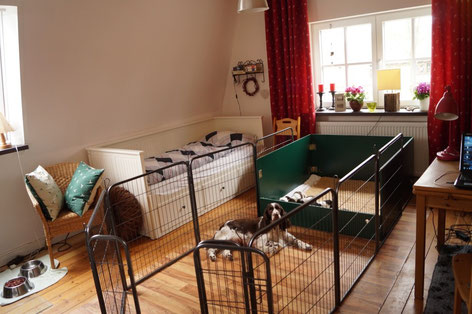 The living space of the puppies is getting bigger..., Photos: Ulf F. Baumann