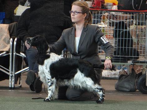 "Jolanthe goes all the way to ""Best of Breed"" in Saarbrücken! Photo: Svenja Arendt"