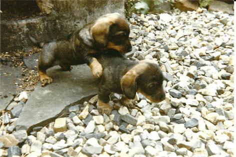 Ambo und Amsel vom Kaufunger Wald, Foto: Ulf F. Baumann