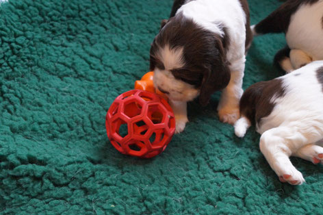 Slowly the puppies start to play, Photos: Ulf F. Baumann