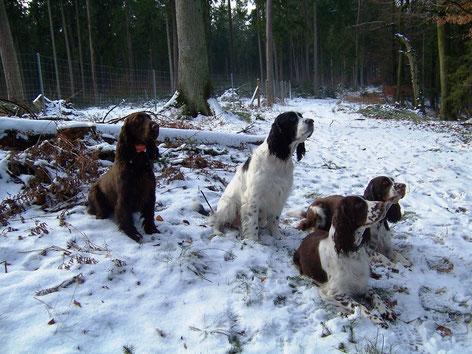 von links: Vicky, Clark, Ilse und Lotta, Foto: Ulf F. Baumann