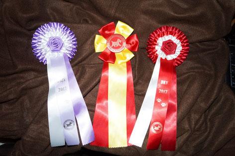 Dorothy won three ribbons in Herning, Photo: Ulf F. Baumann