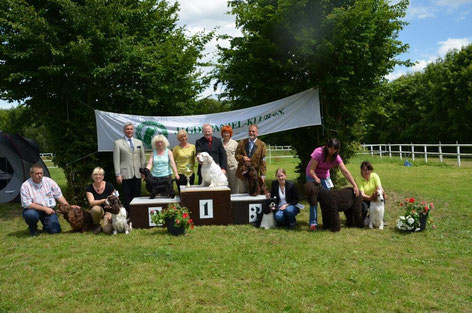 "Klubschau Jagdspaniel-Klub e.V. in Siegen, ""Winterbourne Move On To Belauer See"" BIS 3.Platz, Foto: Felicitous"