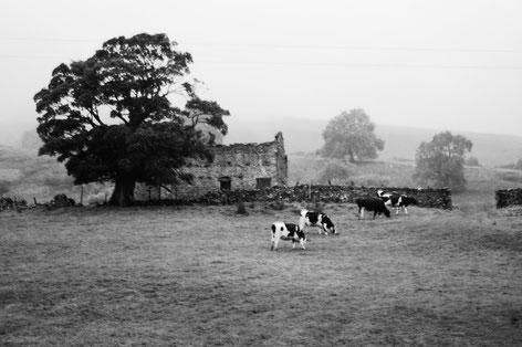 """In den North York Dales, wo der """"Doktor und das liebe Vieh"""" spielte, Foto: Ulf F. Baumann"""