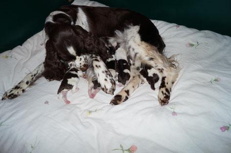 Ilse mit ihren neu geborenen Welpen, Fotos: Ulf F. Baumann