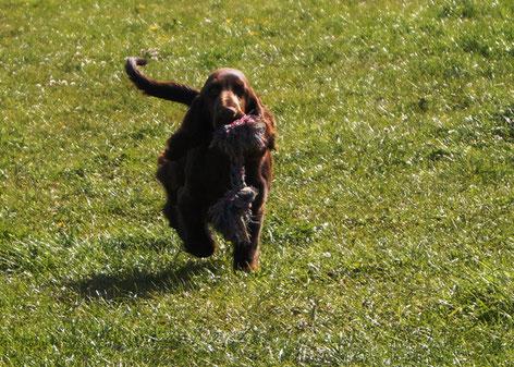 Dorothy enjoys the yard, Photo: Ulf F. Baumann
