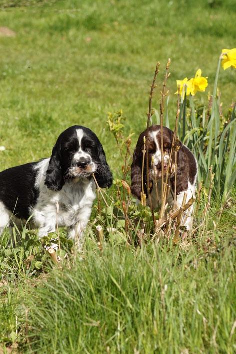 Karl und Knut, Fotos: Ulf F. Baumann