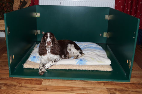 There will be more than one Springer in the litter box very soon..., Photo: Ulf F. Baumann