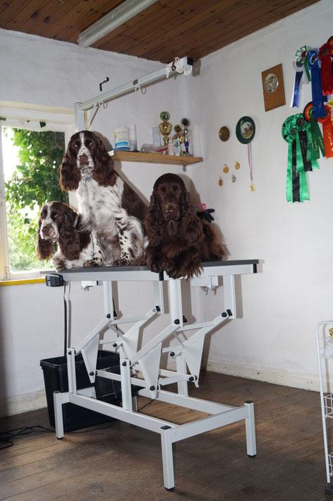 New grooming table..., Photo: Ulf F. Baumann