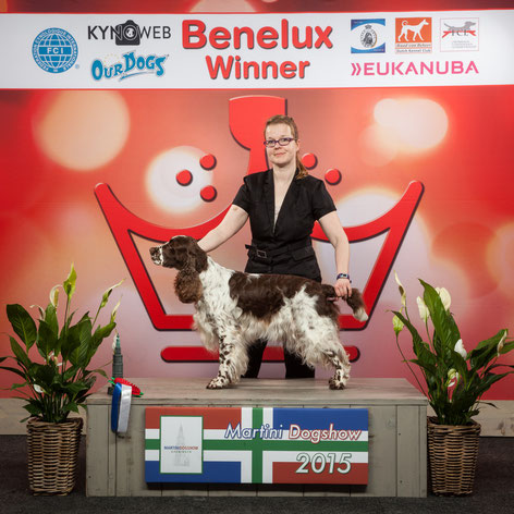 """Deb's Cortina"" wurde Benelux Winner 2015 in Groningen, Foto & Copyright: KYNOWEB"