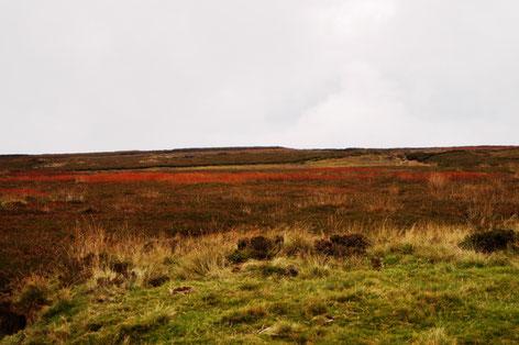 Die Weite der Moors mit ihren vielen Braun- und Rottönen, Foto: Ulf F. Baumann