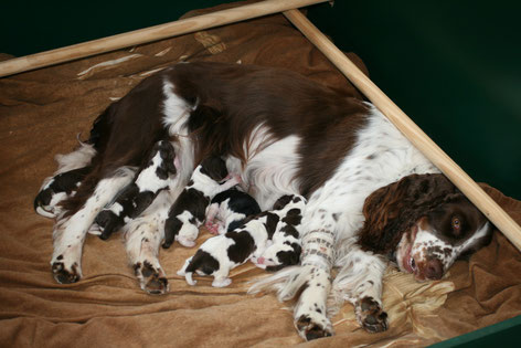 Lotta and her puppies, Photo: Ulf F. Baumann