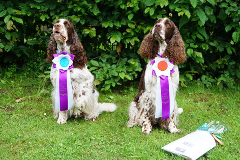 "Team ""vom Belauer See"" has been successful at the Rally Obedience Tournament in Gross Grönau, Germany. Photo: Ulf F. Baumann"