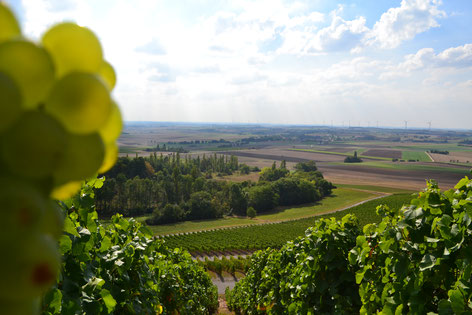 Entdecke das Weinparadies in direkter Nähe!