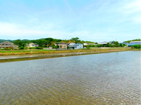 綺麗な山水で満たされた稲田