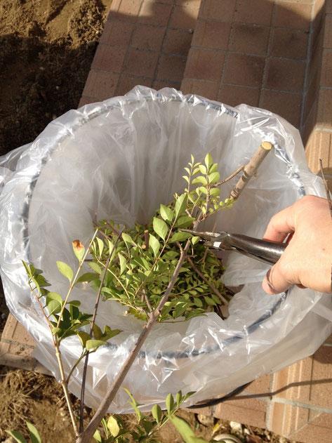 ここの上で剪定した植木を出来るだけ細かく(10cm位に)切っていきます