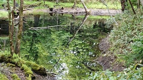 知床五湖自然遊歩道 通称3.5湖
