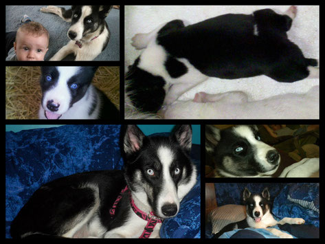 A Collage of Roxy from birth to now