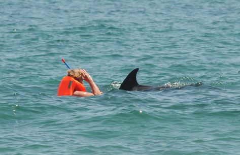 Der Delfin und ich ... Danke für das Foto, lieber Roland Jung
