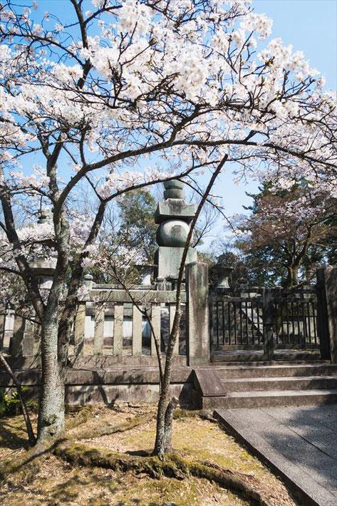 (京都桜の穴場)秀吉のお墓「豊国廟」の五輪塔と桜