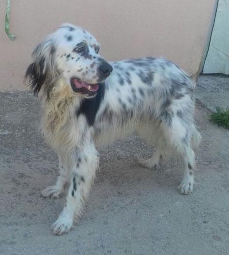 Gustavo wurde von seiner Pflegestelle aus Wuppertal adoptiert.