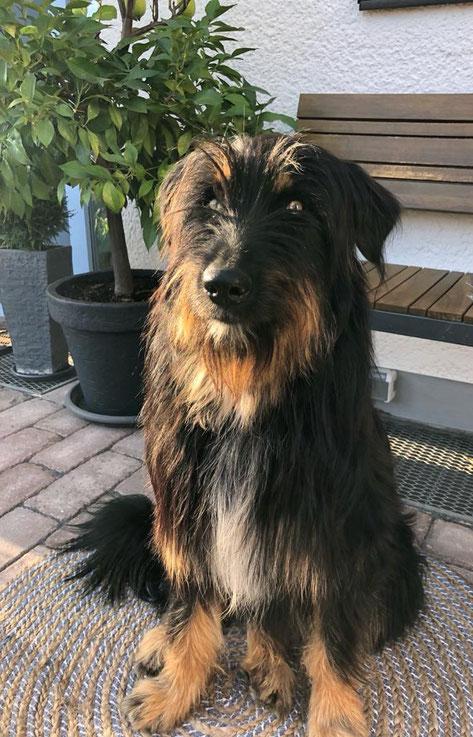 Abby (Umea ) 1 Jahr