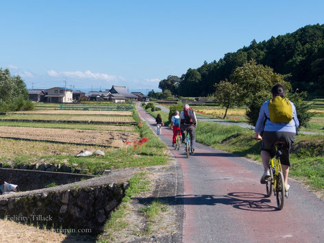 cycling to Shirahige Shrine