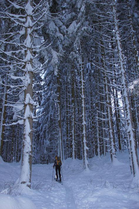 Aufstieg durch den Wald im unteren Teil