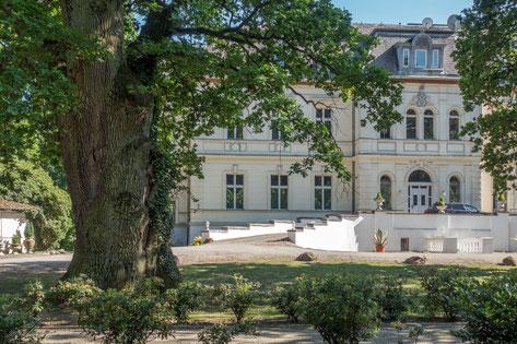 Eiche beim Schloss Schönfeld
